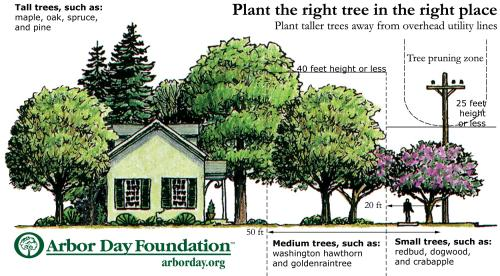 Right-Tree-Place-500x276.jpg